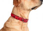 collares perro
