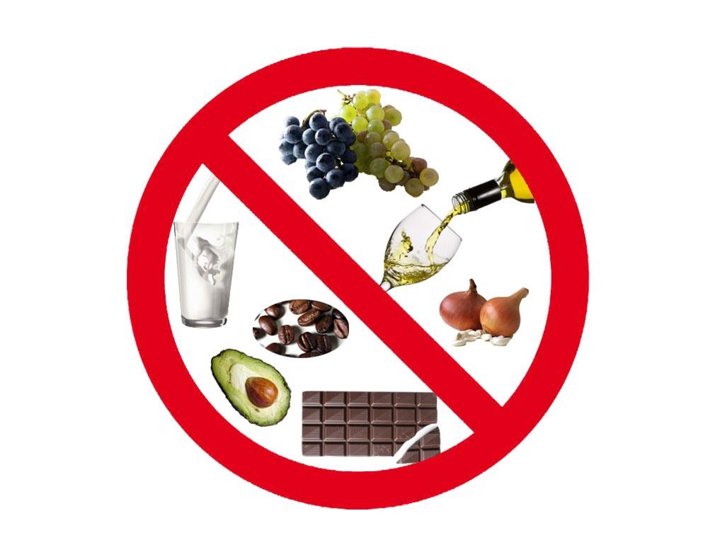 labradores alimentos tóxicos