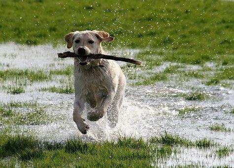 accesorios perro