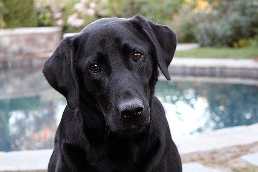 perro ansiedad por separación
