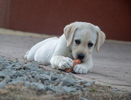 antiparasitario perro