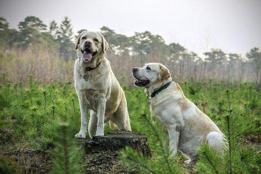 Máquinas cortapelo para perros