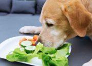 verduras-toxicas-para-perros