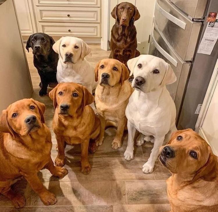 piensos snacks perros