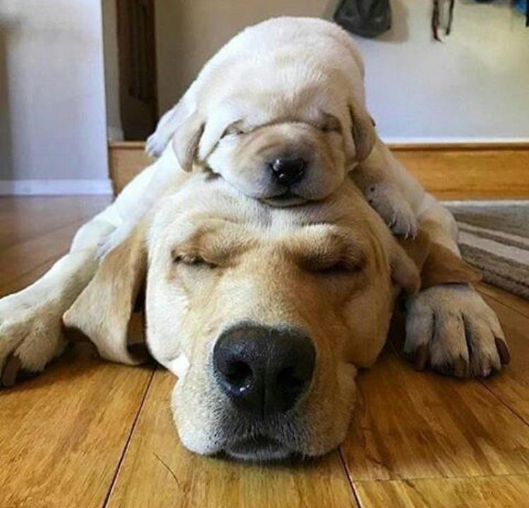 destete perros